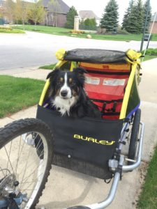 na rowerze z psem